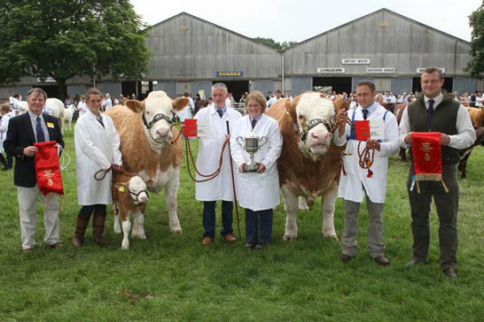 Sacombe Simmentals