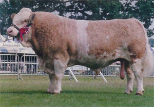 "SACOMBE SHAMUS - ""A real cow breeder"""